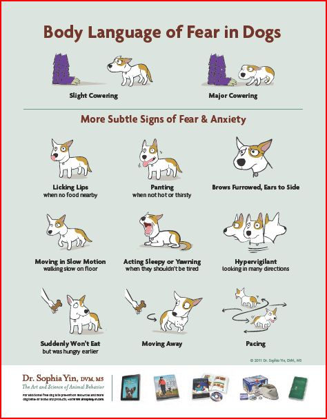 How-to-Read-Your-Dogs-Body-Language